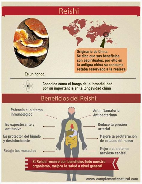 infografía reishi