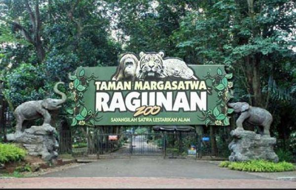 10 Hotel dekat Kebun Binatang Ragunan Jakarta