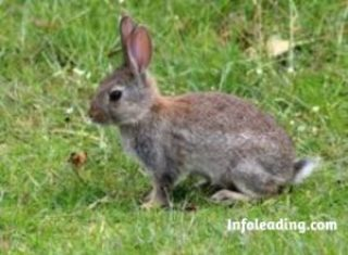 Guide On How To Start A Rabbit Farming Business