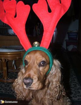 Le renne du Père Noël (Chien)