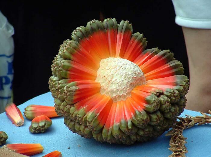 fruits-legumes-etranges-14-1