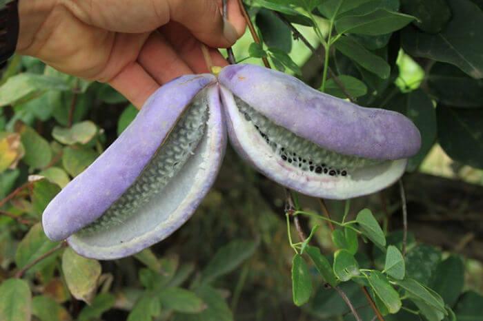 fruits-legumes-etranges-2