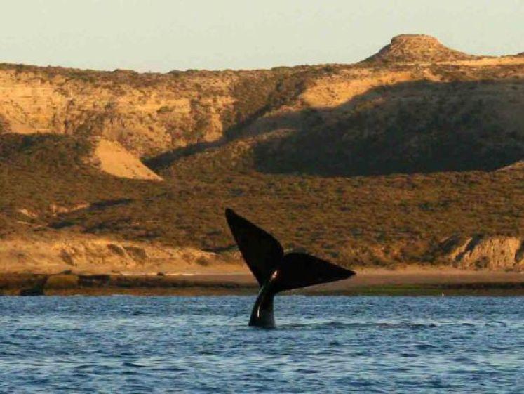 Escapade sous-marine avec les baleines de la péninsule Valdés