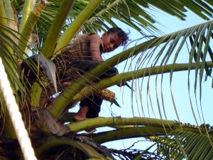 A young lad in a tree on Namu. Photo: Rixzene Ayers