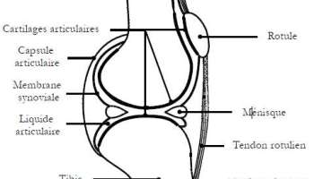what is vaginitis? - a knowledge archive, Human Body
