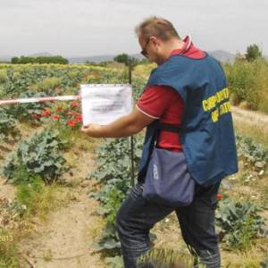 Caivano, sequestrato dalla Forestale un campo di broccoli inquinato
