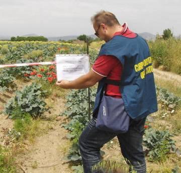 Caivano, sequestrato dalla Forestale un campo di broccoli inquinato