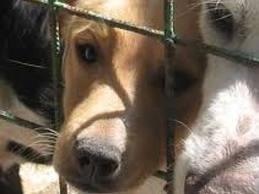 Roma, canile Parrelli sequestrato; la LAV scrive al Sindaco Marino per richiamarlo sul metodo di adozione adottato.