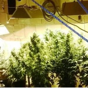 Una serra per la coltivazione di cannabis indica. Scoperti dai carabinieri, padre e figlio in manette