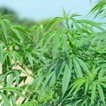 Aversa, sequestro armi e droga. Ritrovate piantagioni di marijuana in un garage
