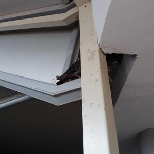 Napoli, scempio all'Ospedale del Mare. Chiudono con una rete metallica un nido di piccioni. Straziante l'attesa della mamma