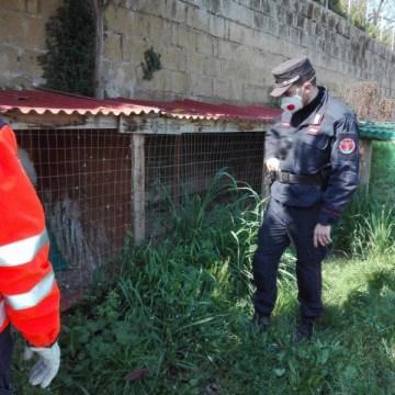 40 Kg di carcasse di rapaci e pulcini; denunciato per maltrattamento di animali
