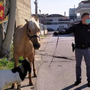 Coronavirus, porta a spasso capra e cavallo. Irresponsabili non sanno più cosa inventarsi