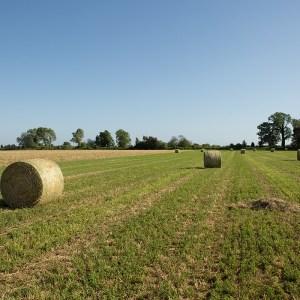 Estorsioni e cavalli di ritorno ad aziende agricole. Sei misure cautelari nel casertano