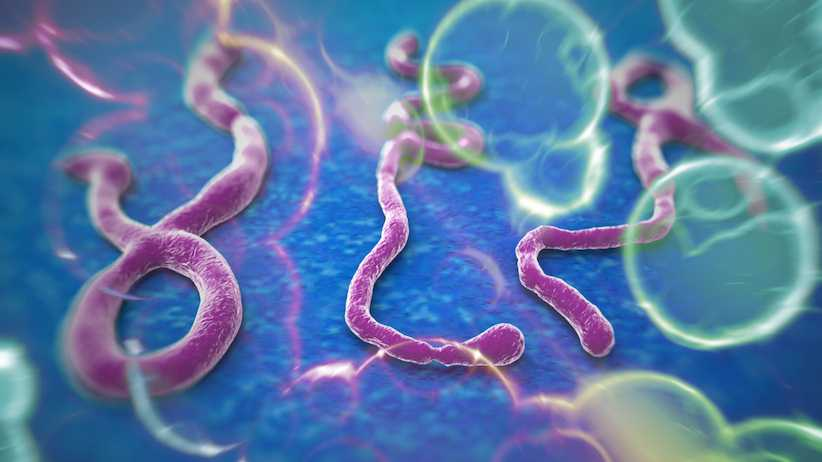 Un roman suspect de Ebola