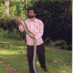Biggest King Cobra Ever Found In The World