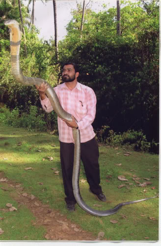 Sreenath Holding the Biggest King Cobra Ever Found in the Word
