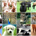 List of Animal Welfare Organizations in India
