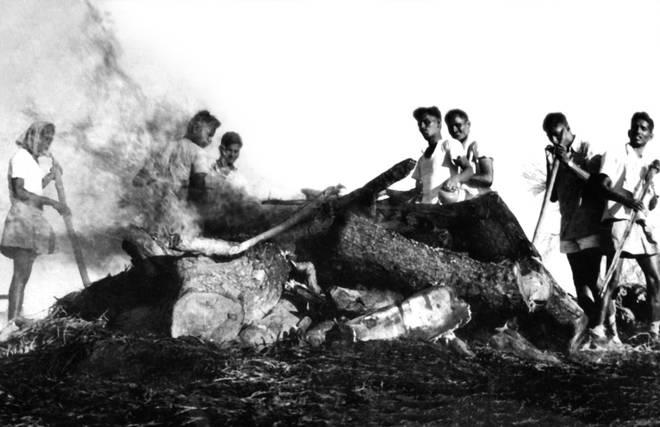 1977 Cyclone death
