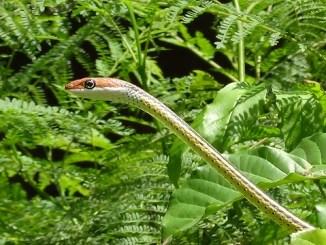 Schlangen Exoten in Not