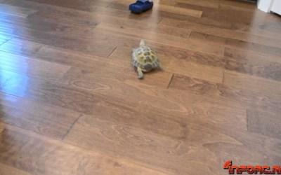 Video de los Viernes: Tortuga Vs Pick up