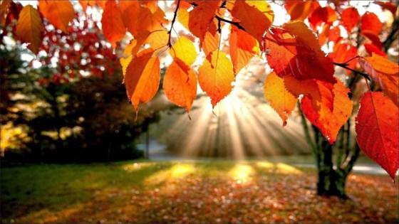 Hay que pasar el otoño
