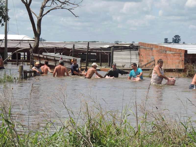 inundados en el campo