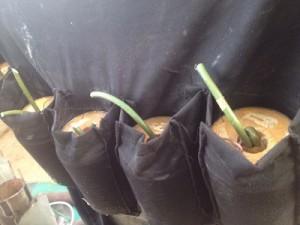 suicide bomb vest