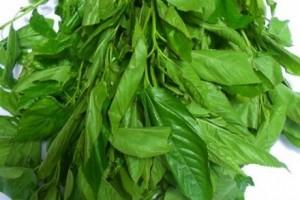 ewedu-leaves-440x294