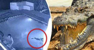 crocodile zimbabwe