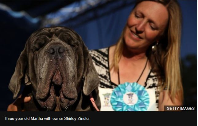'Drooling, snoring, gassy' mastiff named World's Ugliest Dog