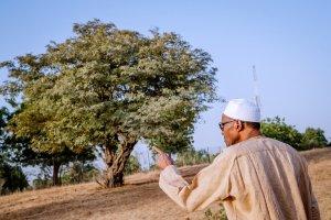D0ME4QSXgAUgnZj - #Nigeria Decides: President Buhari Takes to Farming