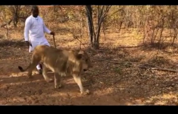 Adebola Williams and his Lion