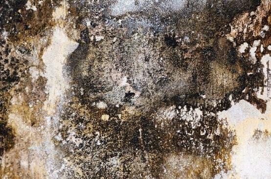 Las humedades pueden acarrear muchos problemas, además de la estética/Img. archivo