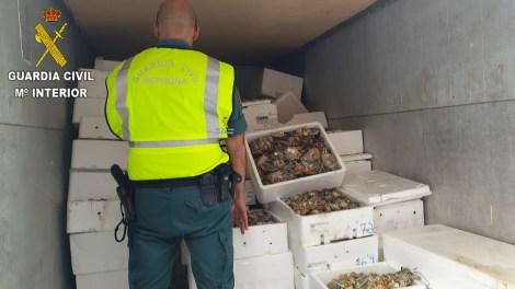 Incautación de marisco en Valencia/Img. GC