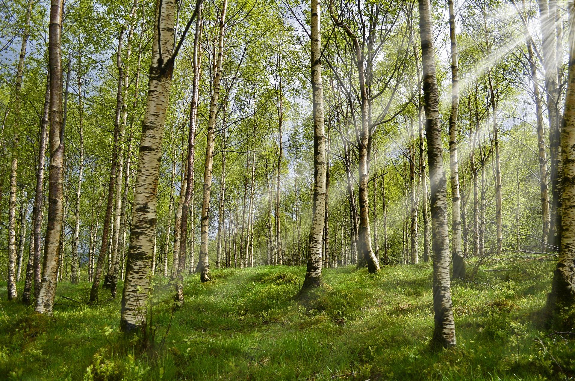 forest-2165356_1920_1493645468928.jpg