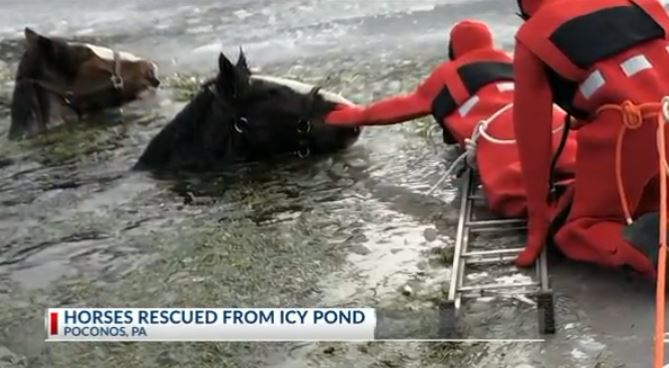 HORSES RESCUED FROM ICY POD_1550500088146.JPG.jpg