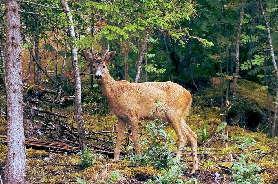 deer-1246523_960_720_1554833876148.jpg
