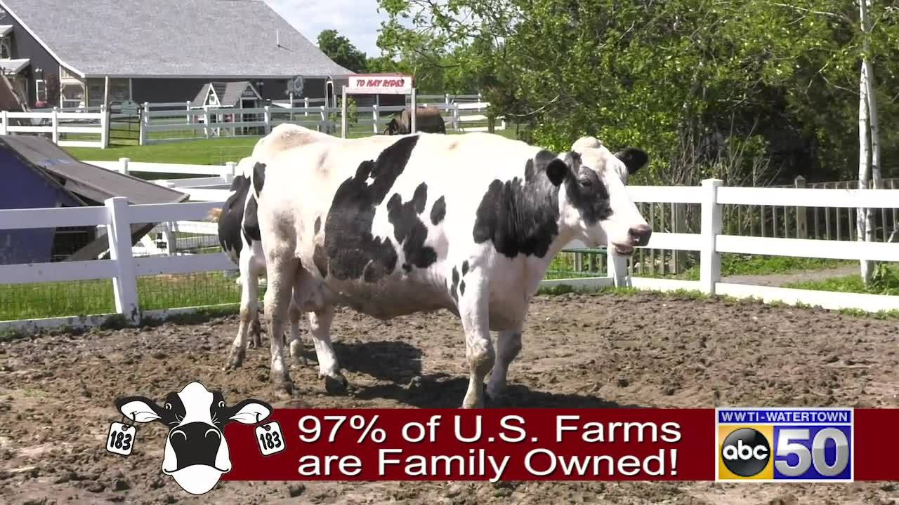 Critter Class 2019 - Patriot the Cow - 061419
