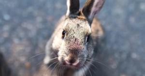 Nuevo ransomware Bad Rabbit, tras la senda de WannaCry y NotPetya