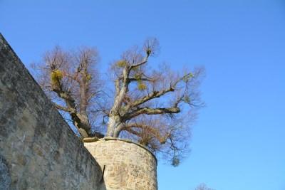 Burg Steinsberg42