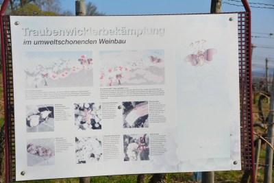 Burg Steinsberg52