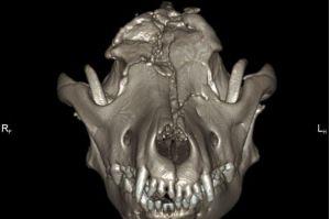X-Ray Tengkorak Theia mengalami kerosakan