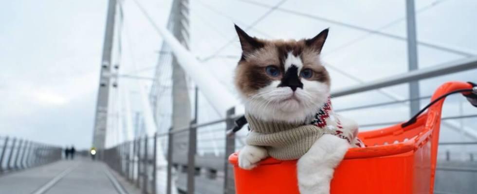 Kenapa kucing timbus najisnya