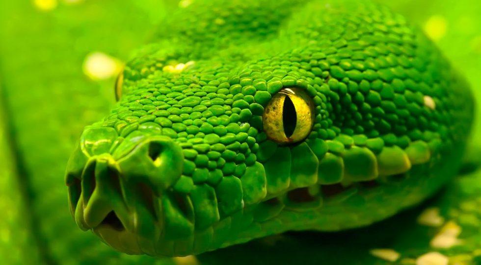Fotos de los depredadores de las serpientes