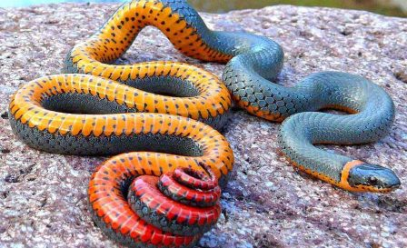 Resultat d'imatges de serpiente