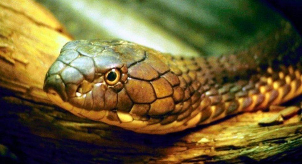 Principales características de las serpientes