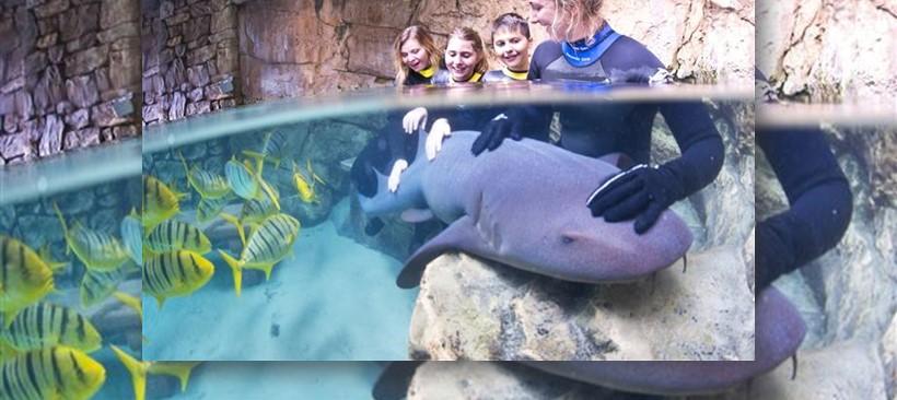 Nada con tiburones en Discovery Cove