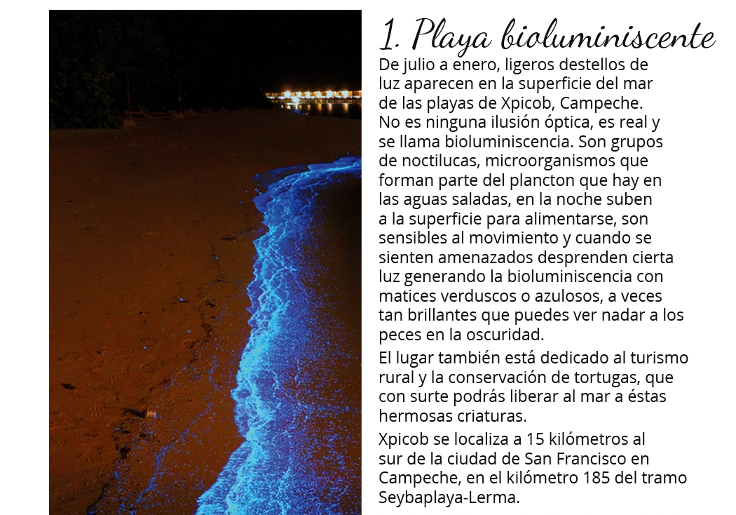 Playa bioluminiscente en Campeche