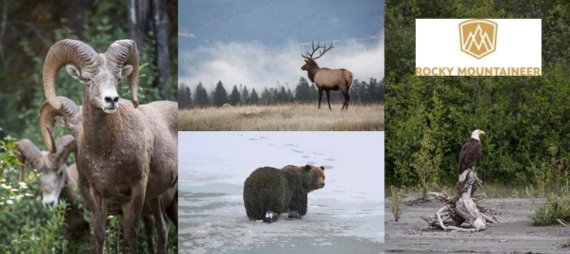 Descubre la vida salvaje de Canadá en Tren